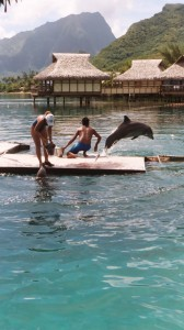 dolphin-quest-1