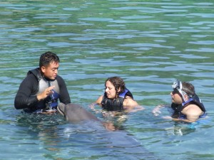 dolphin-quest-2