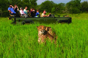 Game Drive with Cheetah Sightings (2)